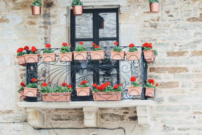 Rośliny na balkonie - jak przygotować balkon i o czym warto pamiętać?